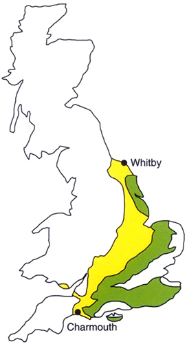 Map of Britain showing the main areas of Jurassic rocks (coloured yellow) and Cretaceous rocks (coloured green). The foreshore and cliffs at Charmouth and Whitby are famous collecting localities for belemnites and other fossils. (© NERC/BGS)