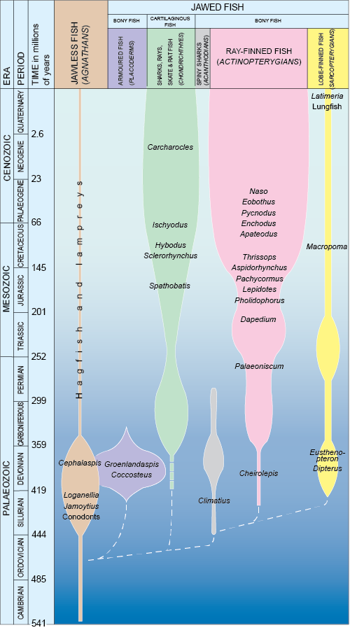 The evolution of the main groups of fish through geological time. The names of