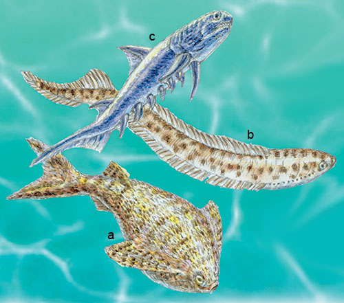 Silurian: the jawless fish Loganellia (a) and Jamoytius (b) together with the 'spiny shark' Climatius (c)
